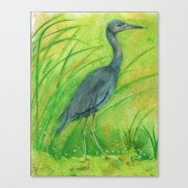 Limonium Ferulaceum Canvas Print