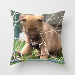 #Goalkeeper of the #new #generation #little #malinois #puppy its #angry Throw Pillow