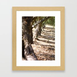 Olive orchard Framed Art Print