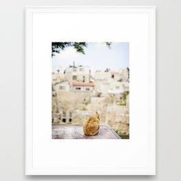 Cat Overlooking Ancient Ruins, Israel Framed Art Print