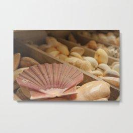 Conchiglie - Matteomike Metal Print