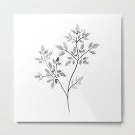 Chervil in Black and White Metal Print