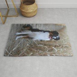 Australian Shepherd in the Nature Rug