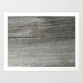 Ash Bark Art Print
