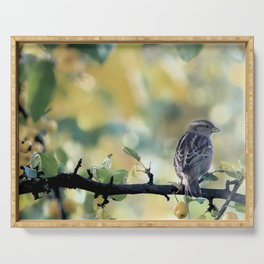 Sparrow on crab apple branch Serving Tray