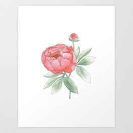 Peony from my Garden Art Print