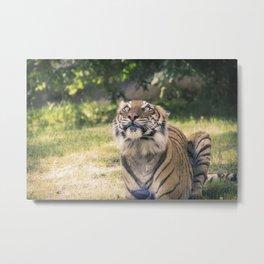 Eyes Wide Open Tiger Metal Print