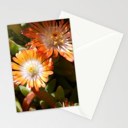 Ice plant Stationery Cards