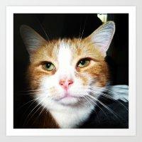 Rescue Cat Art Print