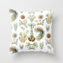 Ernst Haeckel - Scientific Illustration - Bryozoa Throw Pillow
