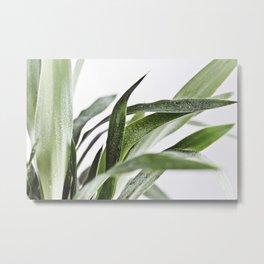 Minimal Yucca Leaves Metal Print