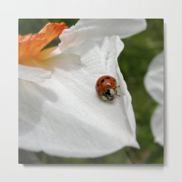 ladybug macro XVI Metal Print