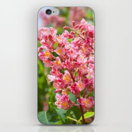 Aesculus red blossom cluster iPhone Skin