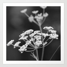 Black and White Floral Art Print
