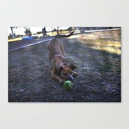 Fetch Canvas Print