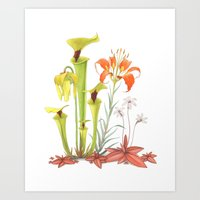 My Pitcher Plant Bog Art Print