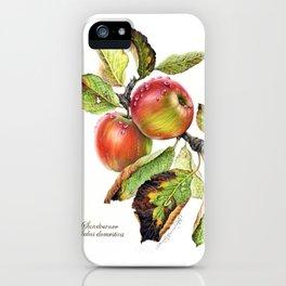 Botanical Study Apple iPhone Case