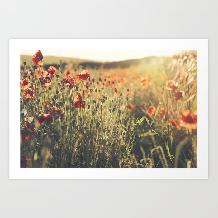 Wildflower Poppy Fields. Art Print