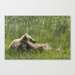 Drifting Off - Bear Cubs, No. 7 Canvas Print
