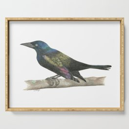 Grackle in the Sunshine - Colored Pencil Serving Tray
