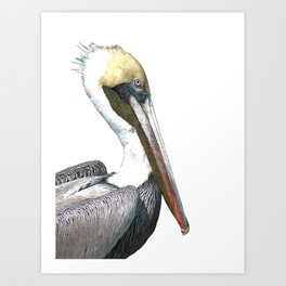 Pelican Portrait Art Print