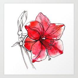 Red Hippeastrum Art Print