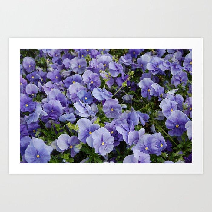 Pansy flower Art Print