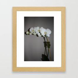 White Orchid Framed Art Print