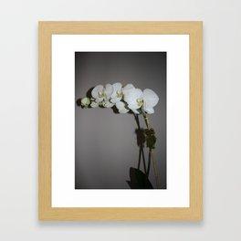 White Orchid Framed Art Print