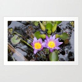 Maui flora III Art Print