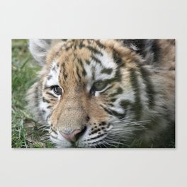 tigercub Canvas Print