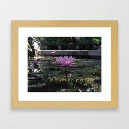 Lily Pad Central Park Framed Art Print