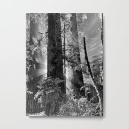 Old Growth Forest Light Black and White Metal Print