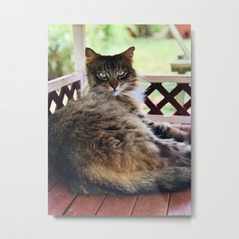 Green Eyes & Fluff (Lanai Cat Sanctuary) Metal Print