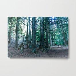 In the Cedars  Metal Print