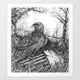 Backyard Hawk Art Print