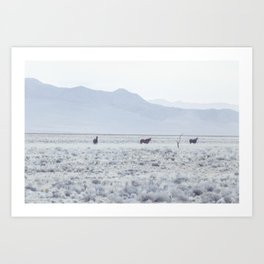 Wild Horses of Namibia Art Print