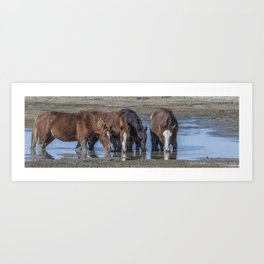 Mustangs Sharing What's Left of the Water Art Print