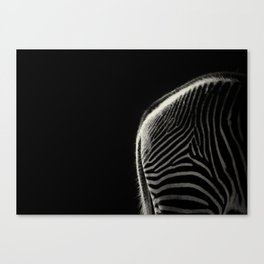 Grevy's Zebra Canvas Print