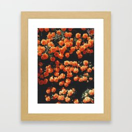 Orange Flowers Everywhere Framed Art Print