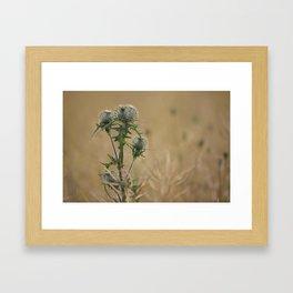 Spear Thistle Framed Art Print