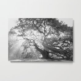 Angel Oak 2 Metal Print