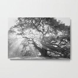 Angel Oak 2 Metal Print
