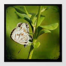 even greener Canvas Print