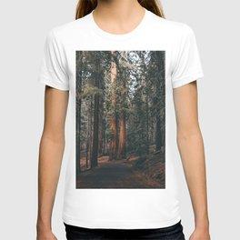 Walking Sequoia T-shirt