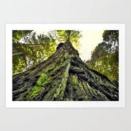The Moss & The Tree Art Print