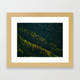 Aerial View OF Green Forest Tall Trees Framed Art Print