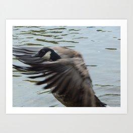 Goose fancy Art Print
