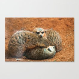 Meerkat Squish  Canvas Print