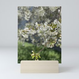 Blossoms Mini Art Print